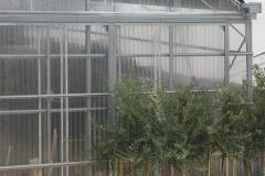 Azienda Agricola Gentili di Sarti Elisa