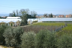 Società Agricola Nannini Vasco & Fratelli
