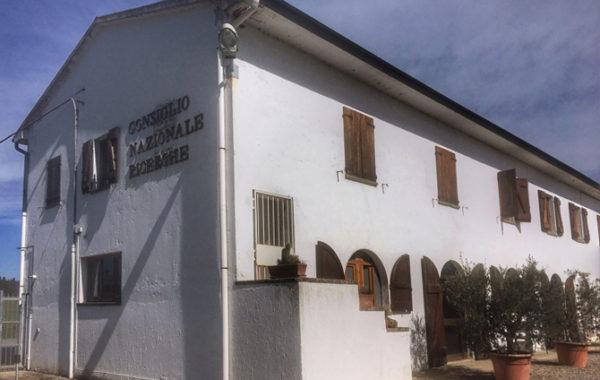 Da Santa Paolina le proposte per far ripartire l'olivicoltura italiana