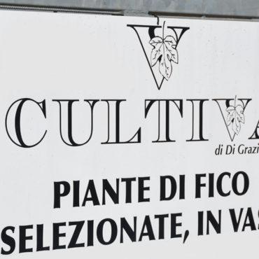 Az. Agr. Cultiva di Di Grazia Silvia