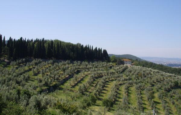 Giurlani lancia il Distretto Olivicolo di Pescia in una nutrita riunione di olivicoltori